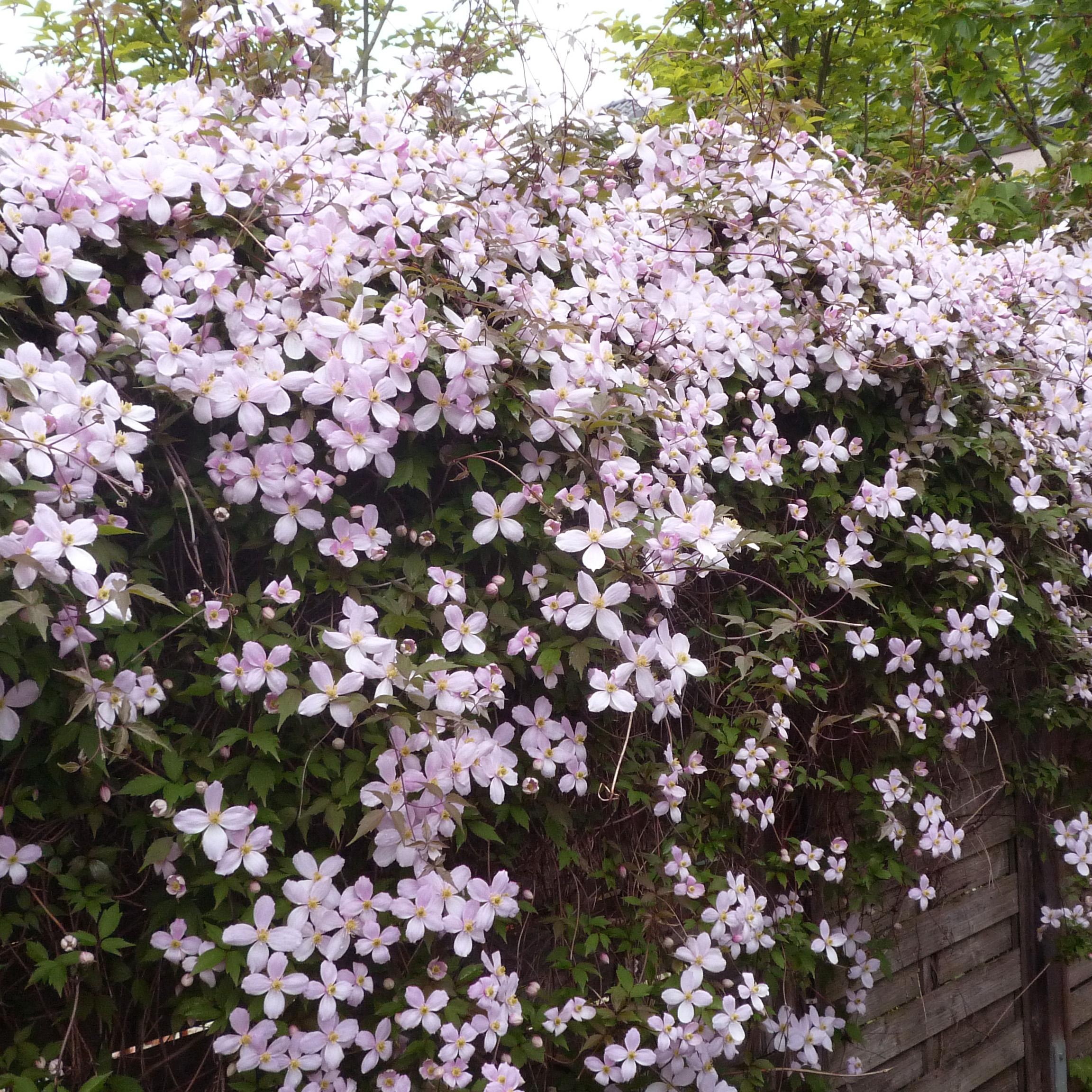 Spezial Blumenerde